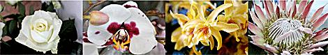 Koillis-Kukka kukkalajitelma